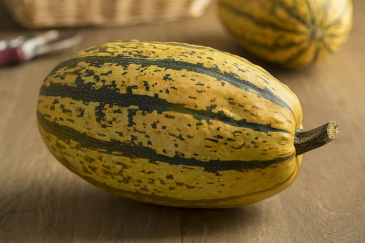 Fresh whole green and yellow striped spaghetti squash