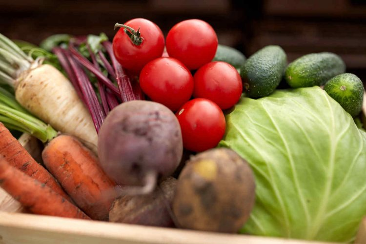 harvest, food and agriculture concept - close up of vegetables on farm